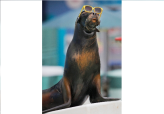 Seal Watches Eclipse