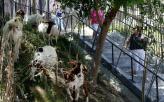 Goat Mowers
